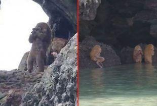 Pola ljudi, pola majmuni snimljeni na Tajlandu
